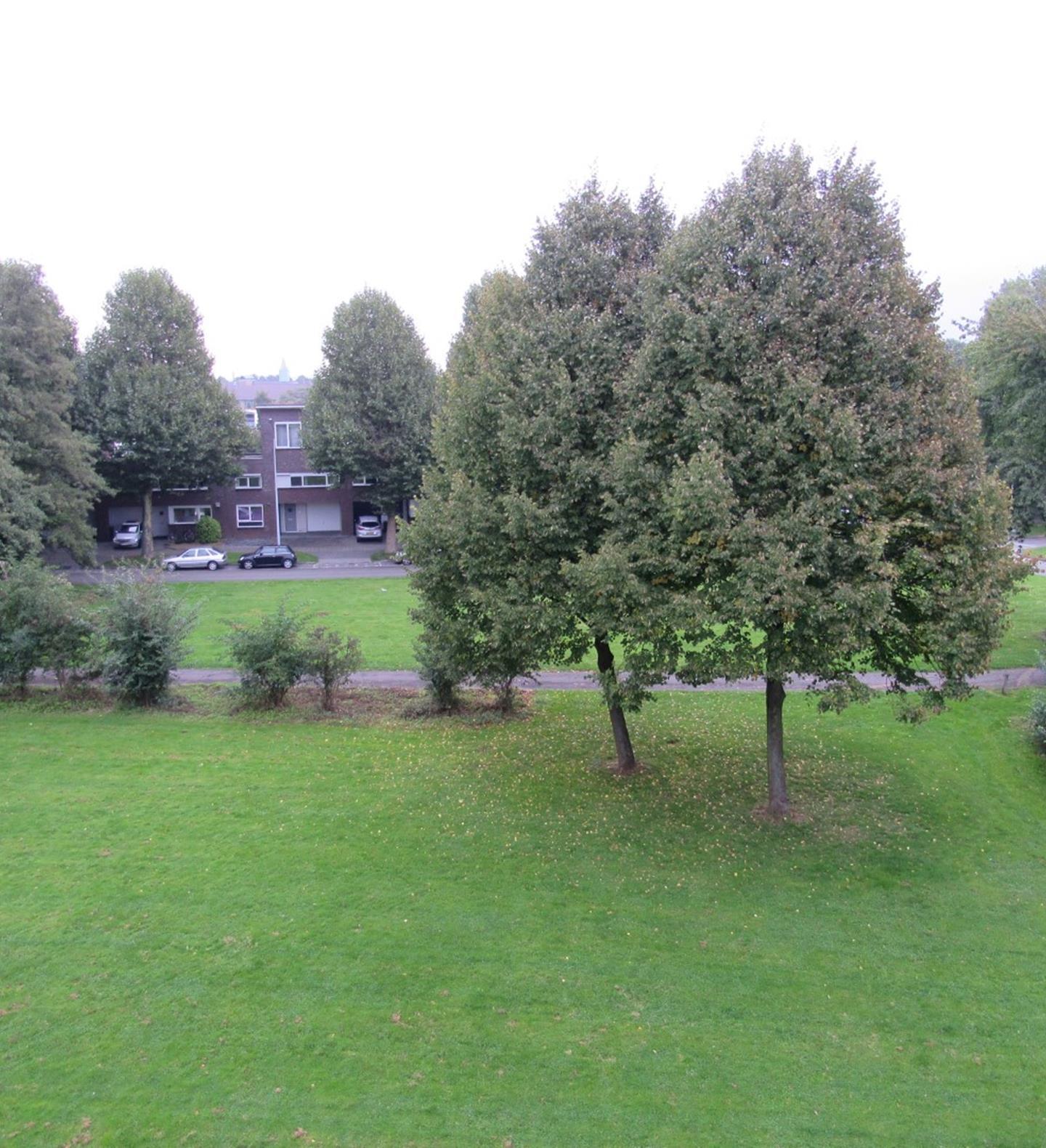 Wolkammersdreef, Maastricht
